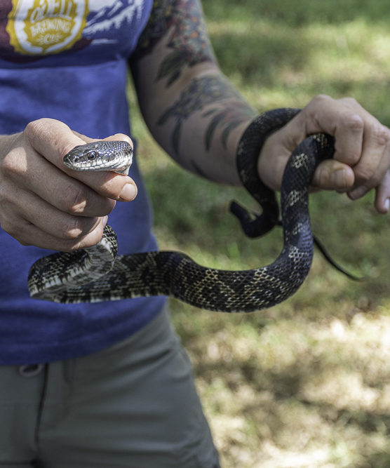 A person holding a snake